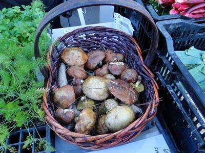 Freshly picked mushrooms