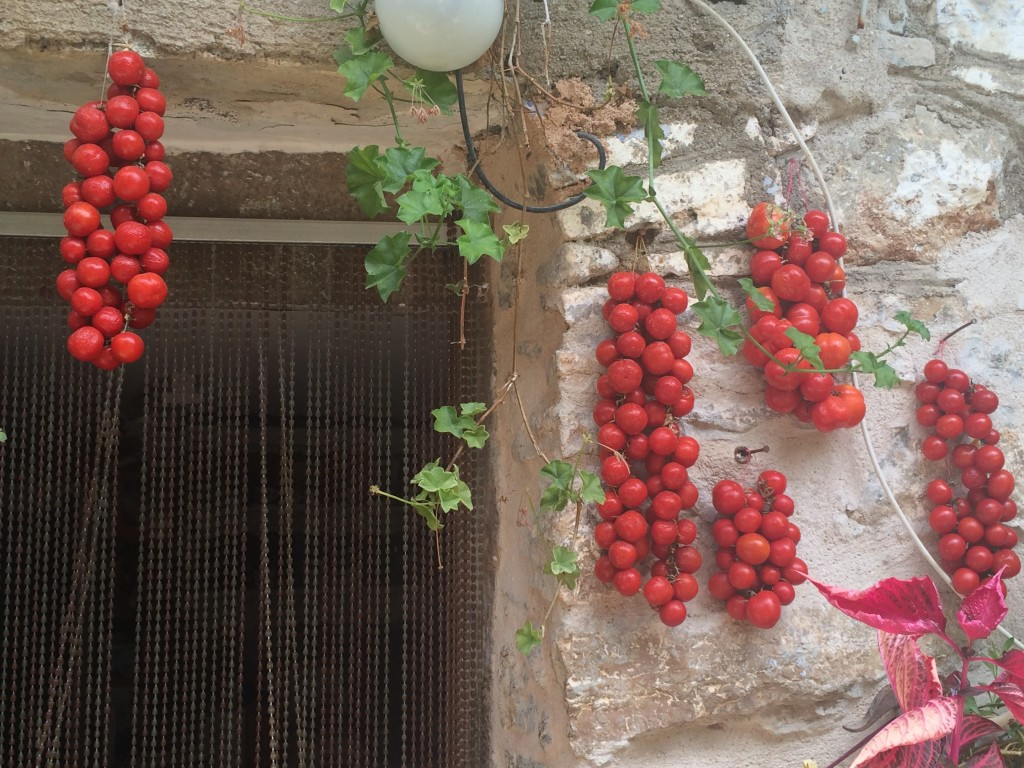 Cherry tomatoes drying in the sun on the island of Chios, Greece
